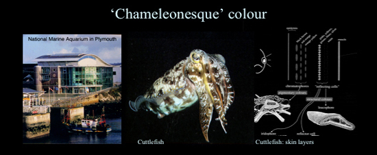 Chameleonesque_colour1